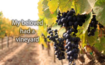 My beloved had a vineyard