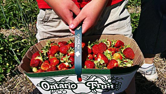 basket-of-strawberries