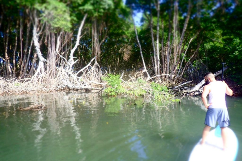Mangrove Beauty