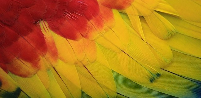 colorful bird feather