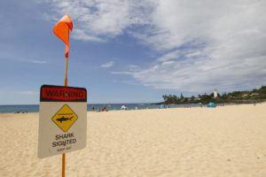 CINDY ELLEN RUSSELL / SEPTEMBER 2017                                 Shark warning signs were posted at Waimea Bay Beach Park today.