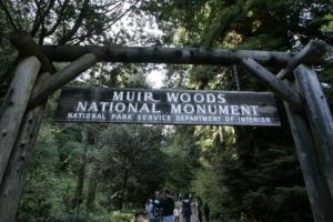 ASSOCIATED PRESS / 2008                                 Visitors walk along a pathway near the entrance to the Muir Woods National Monument in Marin County, Calif. Authorities say a Redwood tree fell and fatally struck a man visiting Muir Woods National Monument Park on Christmas Eve Dec. 24.