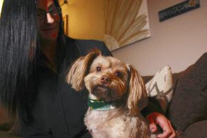 ASSOCIATED PRESS                                 Amy Carter looked at her Yorkshire terrier-Chihuahua mix Bentley, Nov. 5, who has epilepsy. Carter, gives him CBD, which she says has reduced his seizures.