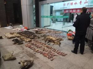 ANTI-POACHING SPECIAL SQUAD VIA AP / JAN. 9                                 Police look at items seized from store suspected of trafficking wildlife in Guangde city in central China's Anhui Province. As China enforces a temporary ban on the wildlife trade to contain the outbreak of a new virus, many are calling for a more permanent solution before disaster strikes again.