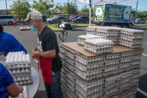 """CRAIG T. KOJIMA / CKOJIMA@STARADVERTISER.COM                                 Volunteer Danny Moa packs eggs for distribution at the Salvation Army's Kroc Center Hawaii drive-thru food distribution event in Ewa Beach Friday morning. The economic toll of the <a href=""""https://www.staradvertiser.com/coronavirus/"""" target=""""_blank"""">COVID-19 pandemic</a> has greatly increased food insecurity in Hawaii."""