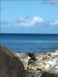 COURTESY DLNR                                 Pupukea Marine Life Conservation District
