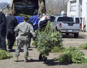ASSOCIATED PRESS / 2016                                 Investigators load marijuana plants onto a Colorado National Guard truck outside a suspected illegal grow operation in north Denver. A county in southern Oregon says it is so overwhelmed by an increase in the number and size of illegal marijuana farms that it declared a state of emergency Wednesday, Oct. 13, appealing to the governor and the Legislature's leaders for help.