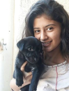 Arshifa's love for dogs