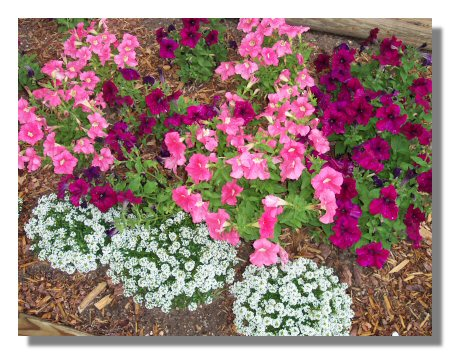 flowers030811.jpg