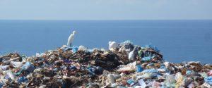 bird on trash