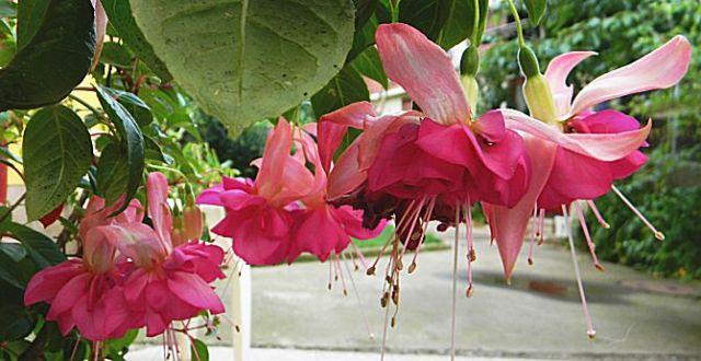 Furtul florilor de pe pervaz este noua afacere de sezon în Bucureşti