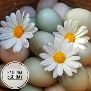 "A basket full of colorful eggs with decorative daisy flowers.  In the corner, text that says ""National Egg Day""."