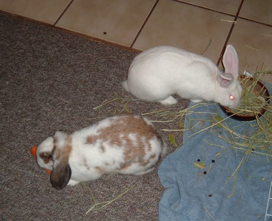 the bunnies eating in the kitchen