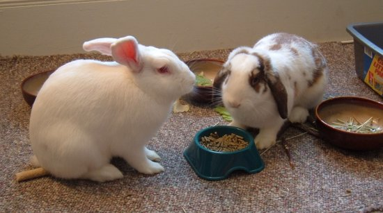 gussy and betsy eating pellets