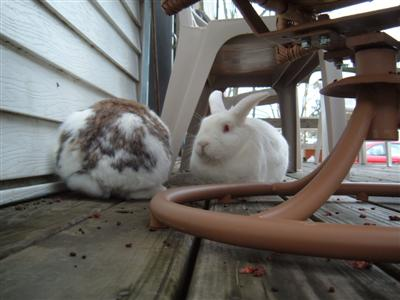 bunnies-on-moms-porch-003-custom.jpg