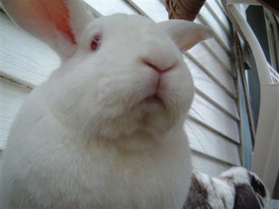 bunnies-on-moms-porch-006-custom.jpg