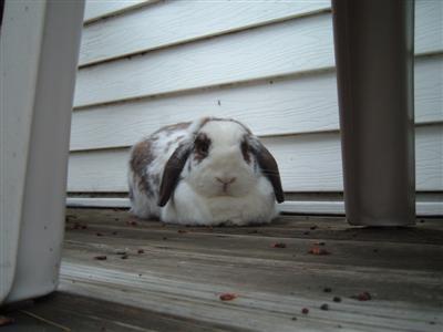 bunnies-on-moms-porch-009-custom.jpg