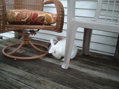 bunnies-on-moms-porch-016-custom.jpg
