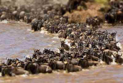 The Best Time To See The Great Wildebeest Migration