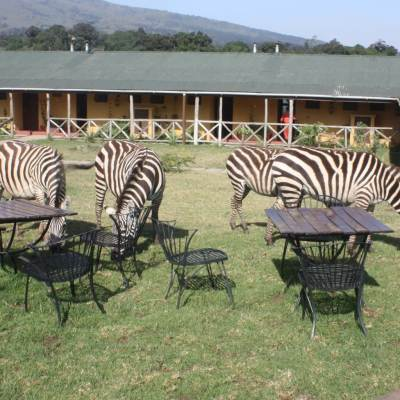 Rhino Lodge, Tanzania