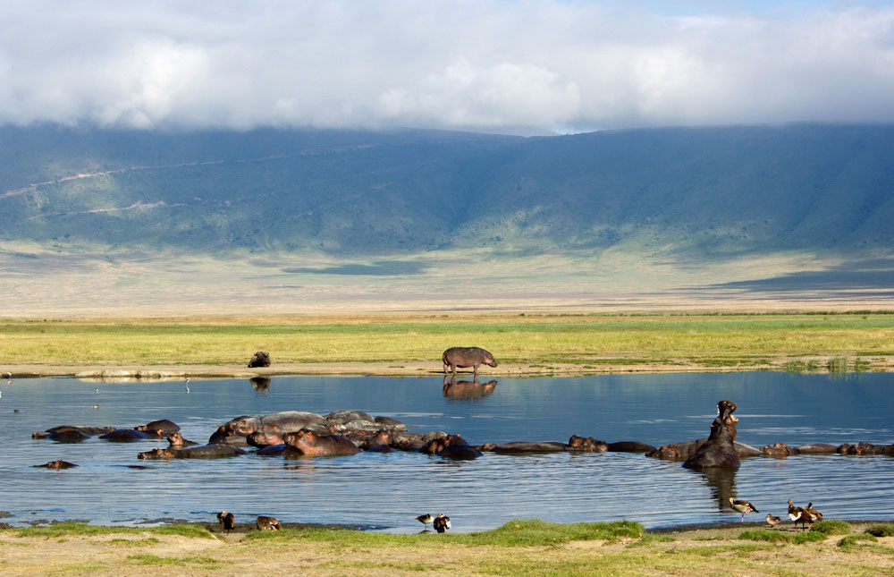 Hippos at Ngorongoro Conservation Area