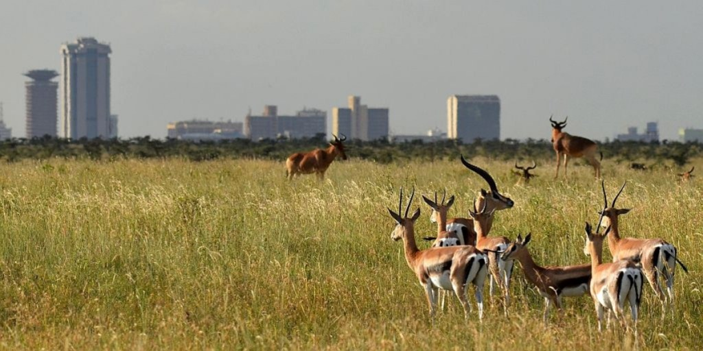 Gazelles in Nairobi National Park