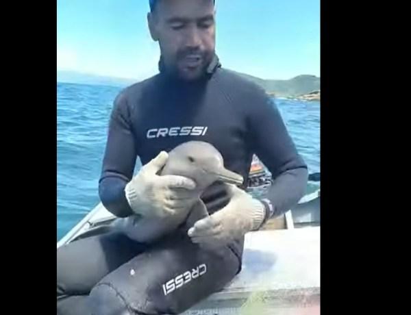 Un pêcheur sauve un bébé dauphin pris au piège