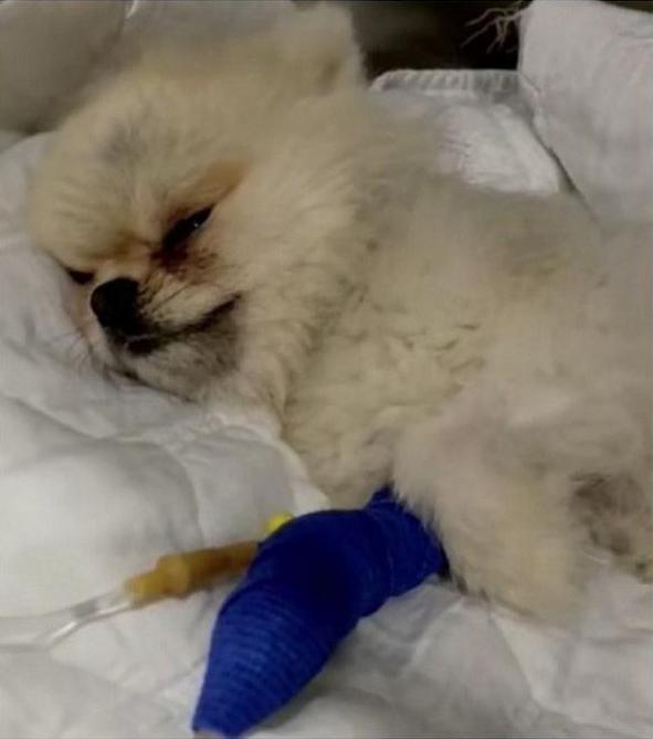 Maeva Ghennam : accusée de maltraiter son chien, elle répond et pousse un énorme coup de gueule !