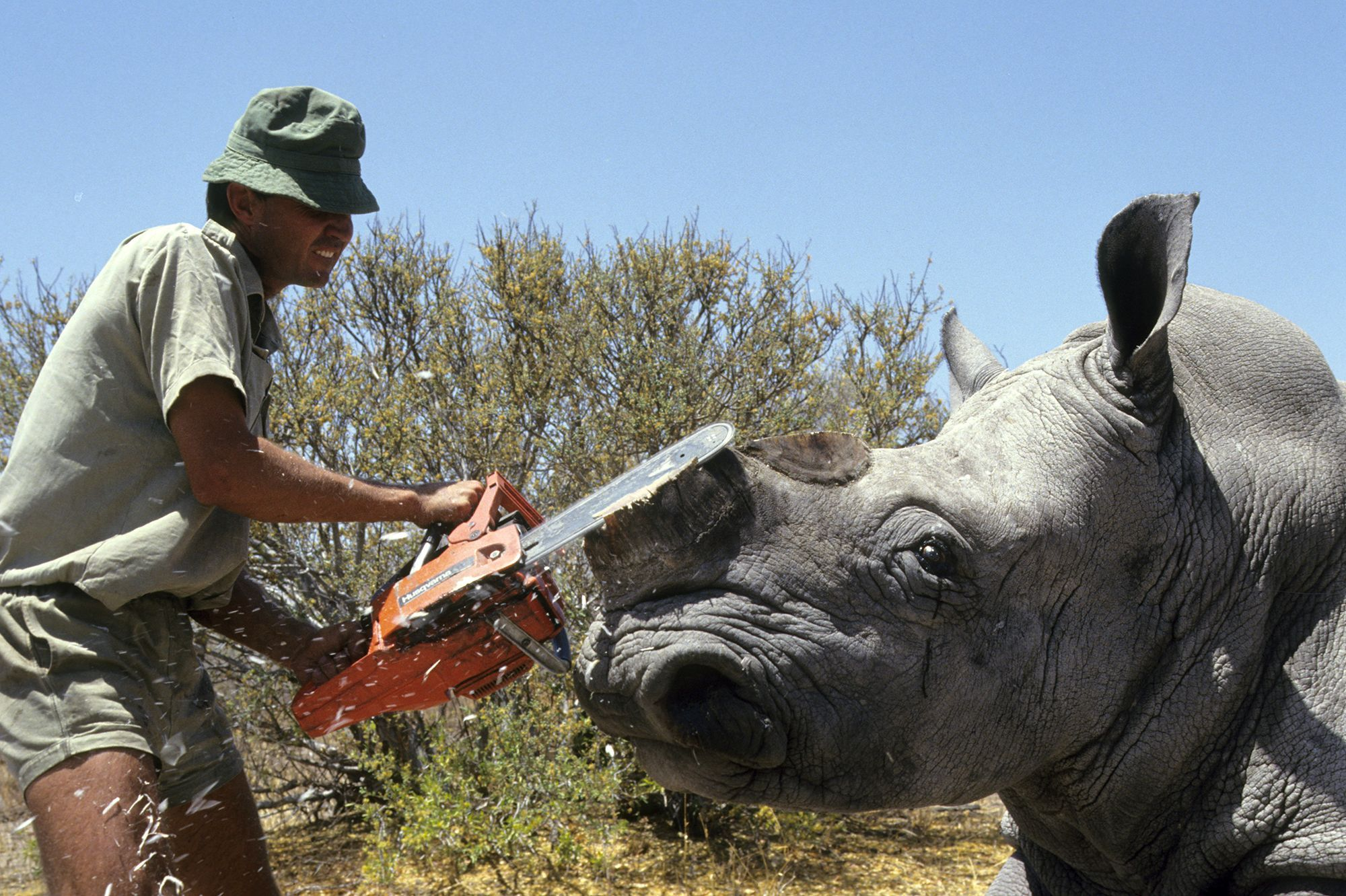 Afrique du Sud : Des rhinocéros bientôt rendus radioactifs pour éviter le braconnage ?