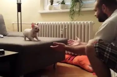 Puppy jumping
