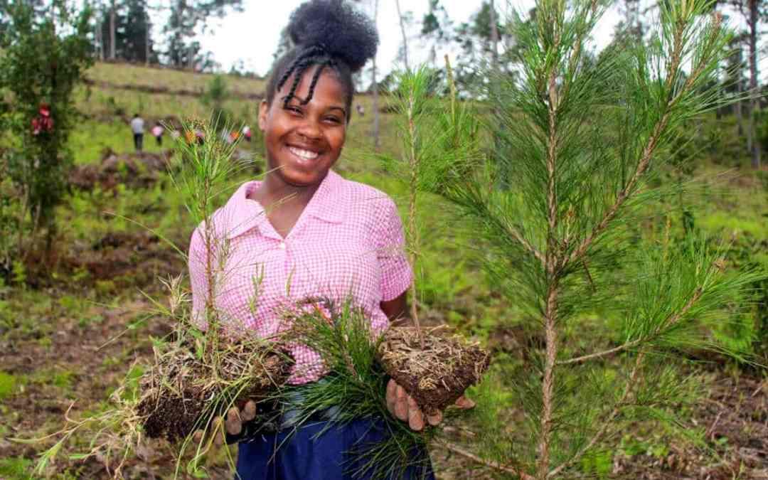 Trädplantering i Haiti