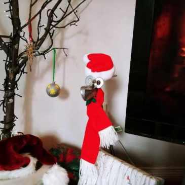 Kevin in Santa hat under tree