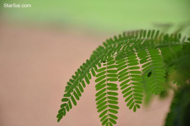 Leaf ..Shades of Green
