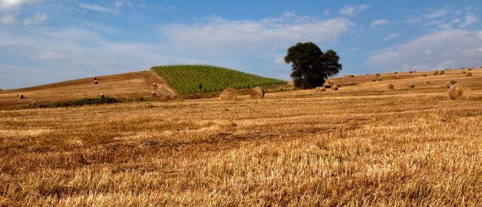 azienda-agricola-pierluigi-castiglione