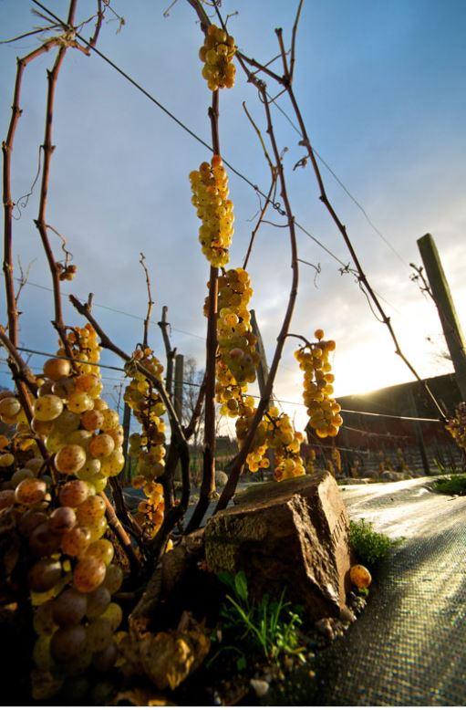 blaxta-winery_1