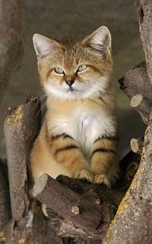wildcatbaby