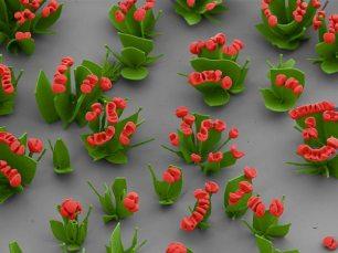 scientists-make-nano-flowers-field-red_67526_600x450