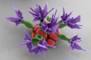 scientists-make-nano-flowers-purple_67527_600x450