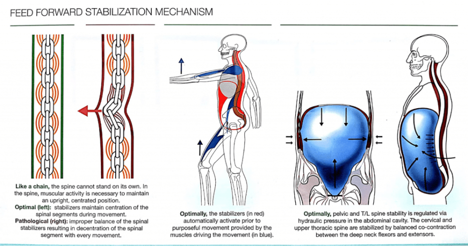 Feed Forward Stabilization Mechanism Exercises That Cause Back Pain