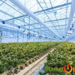 Cannabis startup