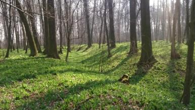 Baštecký les