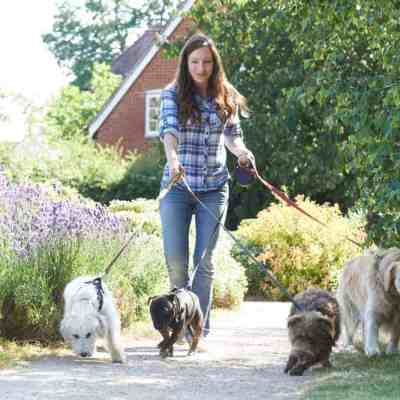 Earn money walking dogs during school hours