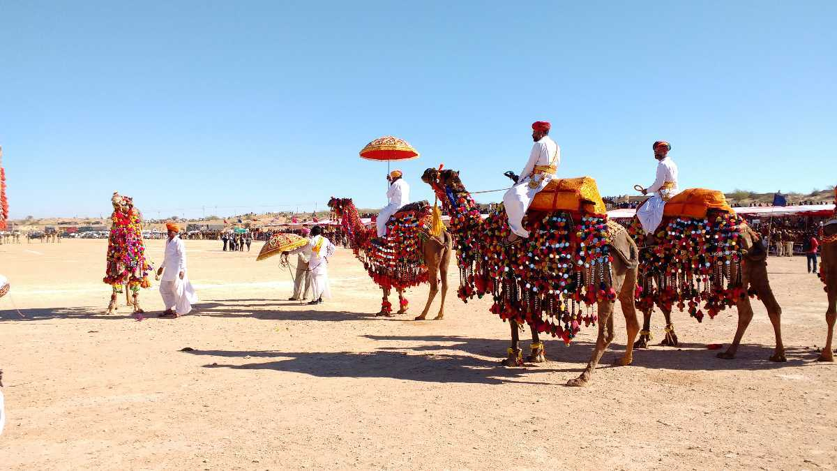 man climbing on camels