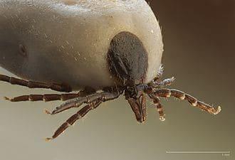 Lyme Disease Forum in May to update Staten Islanders