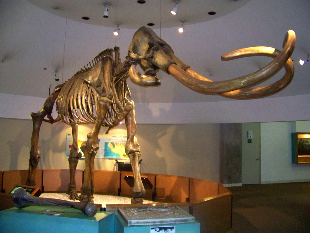 Columbian Mammoth State Fossil