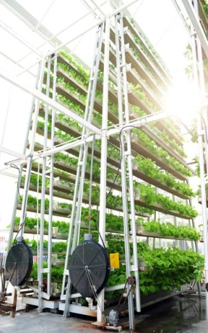 Vertical Farming Is Key to the Smart Cities of the Future | StateTech Magazine