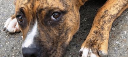 Animal Abuse Statistics