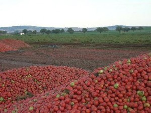 Pomodori-ammassati (trashfood.com)