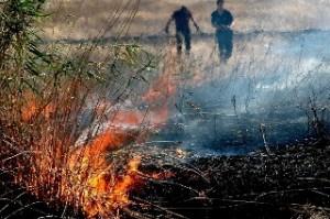 Ordinanze del sindaco di Manfredonia  contro le bruciature delle stoppie (immagine d'archivio)