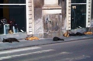 Abbandoni cani in Puglia (image google.it)
